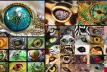 Extant and extinct life forms / Eliöitä