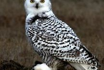 Beautiful Owl Pictures / A collection of the most beautiful photographs of owls