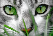 Animals - Cats / They make me feel good! :) / by Michael Bentley