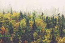 Falling for Fall / Die schönste Mode für kühle Herbsttage / by FASHION ID