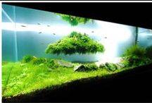 I want a fish tank...