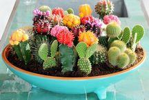 Vet Plante / Fat Plants.. :)
