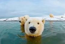 Amazing Animals! / Amazing Animals! / by Christine Cirka