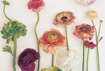 Blooms - Ranunculus / Ranunculus are the sweetest blooms with true minds of their own!  You'll love the twisty stems and endless petals in these wedding bouquets, corsages, bouts, and centerpieces.