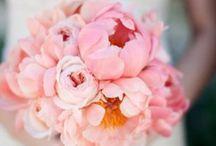 Blooms - Peony