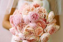 Blooms - Garden roses
