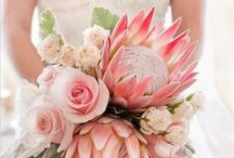 Blooms - Protea / These once unheard-of blooms have made a big splash in the wedding flower world and are now the hottest addition to your wedding decor! Add protea to your bouquets and centerpieces for instant rustic glamour.