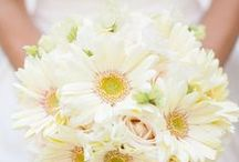 Blooms - Daisies