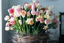 Spring Flowers / Now the Christmas festivities are over we're looking ahead to the Spring and celebrating the beauty of tulips, narcissi, hyacinths and other gorgeous flowers blooming in our homes and gardens