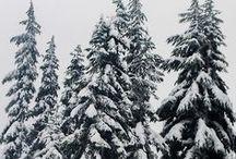 MOOD | Winter
