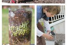 Gardening / Huerto y plantas