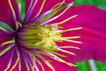 Flower ✿ Power