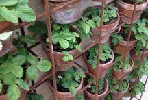 Garden life inspiration / Gardening