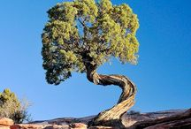 Tree spotting / Trees