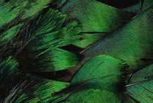 MOOD | Green