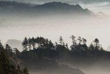 MOOD | Fog