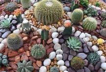 Fire pits and Cacti, a classic combo! / I love this combo