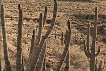 Desertic Land