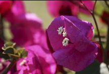 """Grazie dei fiori"" / Flowers"