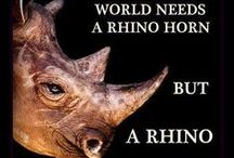 For the Love of Rhinos / For us to share pics of these gentle, gorgeous animals under threat of extinction.  (Photo credits - unfortunately not always known, these are not our images)