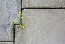 Urban nature / Quand la nature investit la rue