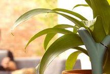 Green technology / Quand la technologie se met au service des plantes (ou inversement)