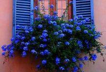Window Garden / La nature en ville... à vos fenêtres !
