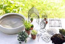 Mini Garden / Mica Decorations - Mini Garden