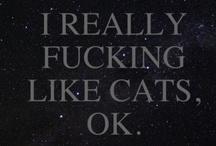 Cats = love / by Di Hernandez