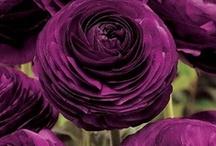 Flowers / by Jaci Gahlbeck