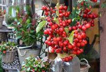 seasonal / I've learned to see the beauty in each season. / by Ada | Classiq