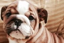 All about: Furry Babies / Sweet, cute, adorable little animal pictures.