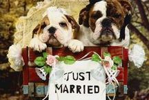 Wedding: Pets / by Wanda Parsons