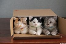 Cats and Boxes / by Wanda Parsons