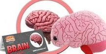 Brain / The more brain cells you have, the smarter you are. GIANTmicrobes are plush stuffed animals that look like tiny microbes - only a million times actual size! Gag and geek gifts, science, microbiology and biology toys for students, teachers, scientists, nurses and doctors - each coming with an image and information about the real microbe it represents. They make great educational learning tools as well as amusing gifts for anyone with a sense of humor.
