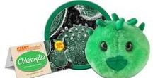 Chlamydia - Chlamydia Trachomatis / Playing doctor is a game you don't want to lose. Know the rules. GIANTmicrobes are plush stuffed animals that look like tiny microbes - only a million times actual size! Gag and geek gifts, science, microbiology and biology toys for students, teachers, scientists, nurses and doctors - each coming with an image and information about the real microbe it represents. They make great educational learning tools as well as amusing gifts for anyone with a sense of humor.