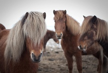 Horses  / by Snickers Lily