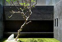 1 Terraza y Jardines Entrada GARDEN & TERRACE ENTRY / by Arch Stanton