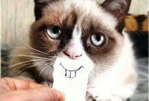 || laugh || / Sometimes I'm funny.... / by Elizabeth Pietras