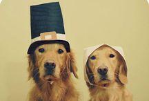 dog costume *