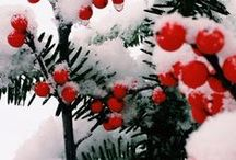 A Hazy Shade Of Winter / Christmas