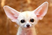 most beautyful animal photos!