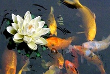 Something Fishy / Fish and Ponds