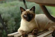 Cats ♥♥