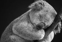 Australian Animals / G'day mate! Here are some pictures of the cutest critters from Down Under.