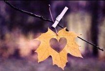 DIY // autumn // Herbst