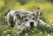 Illustrations - nature