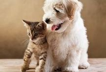Pet & Animal Quotes / Quotes for pet and animal lovers. / by Quotery