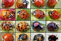 Insecten in de tuin