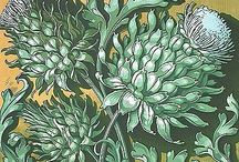Acanthus / Prachtige plant